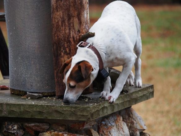 Around the tree, on the ledge, under the limb - got it!