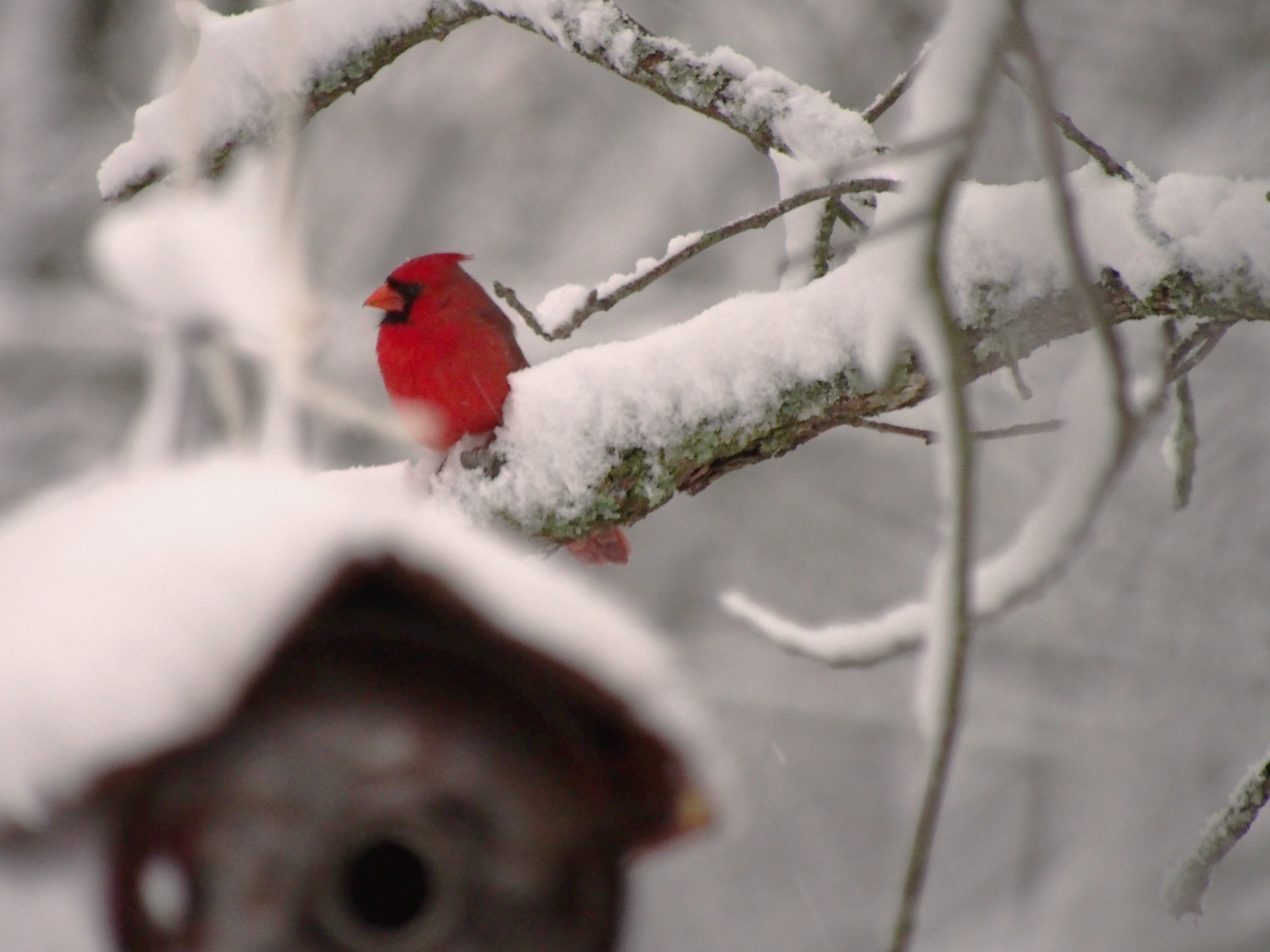 Snow On First Day Of Spring Makes Me >> Cardinals Celebrate The First Day Of Spring At The Stone House The
