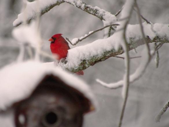 Ignoring me behind a birdhouse...