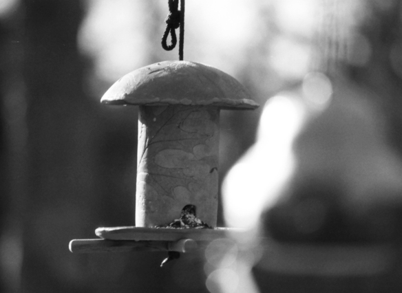 Ceramic bird feeders in the sunshine - I had the aperture wide open and enjoyed playing with the DOF