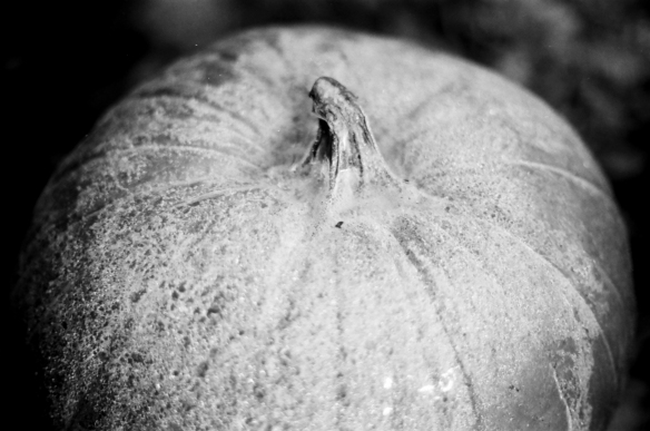 A close up of the frosty pumpkin - I love how it disappears into the darkness of the shadows.