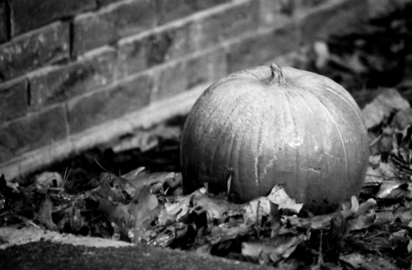 There was actually frost on this pumpkin. I do love the way the greys in black and white film print. So many shades of grey. It's tough to pull this off in photoshop.