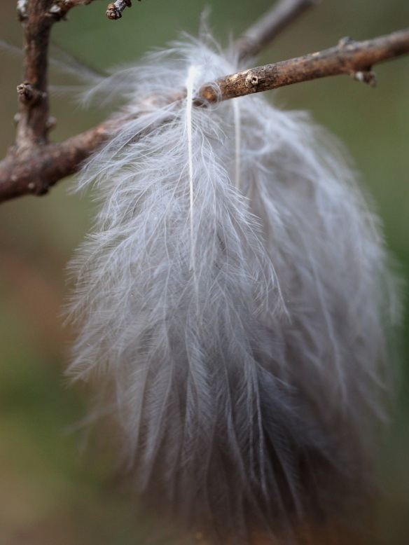 This inch-long bundle of feathers is suspended over a limb on the lilacs...