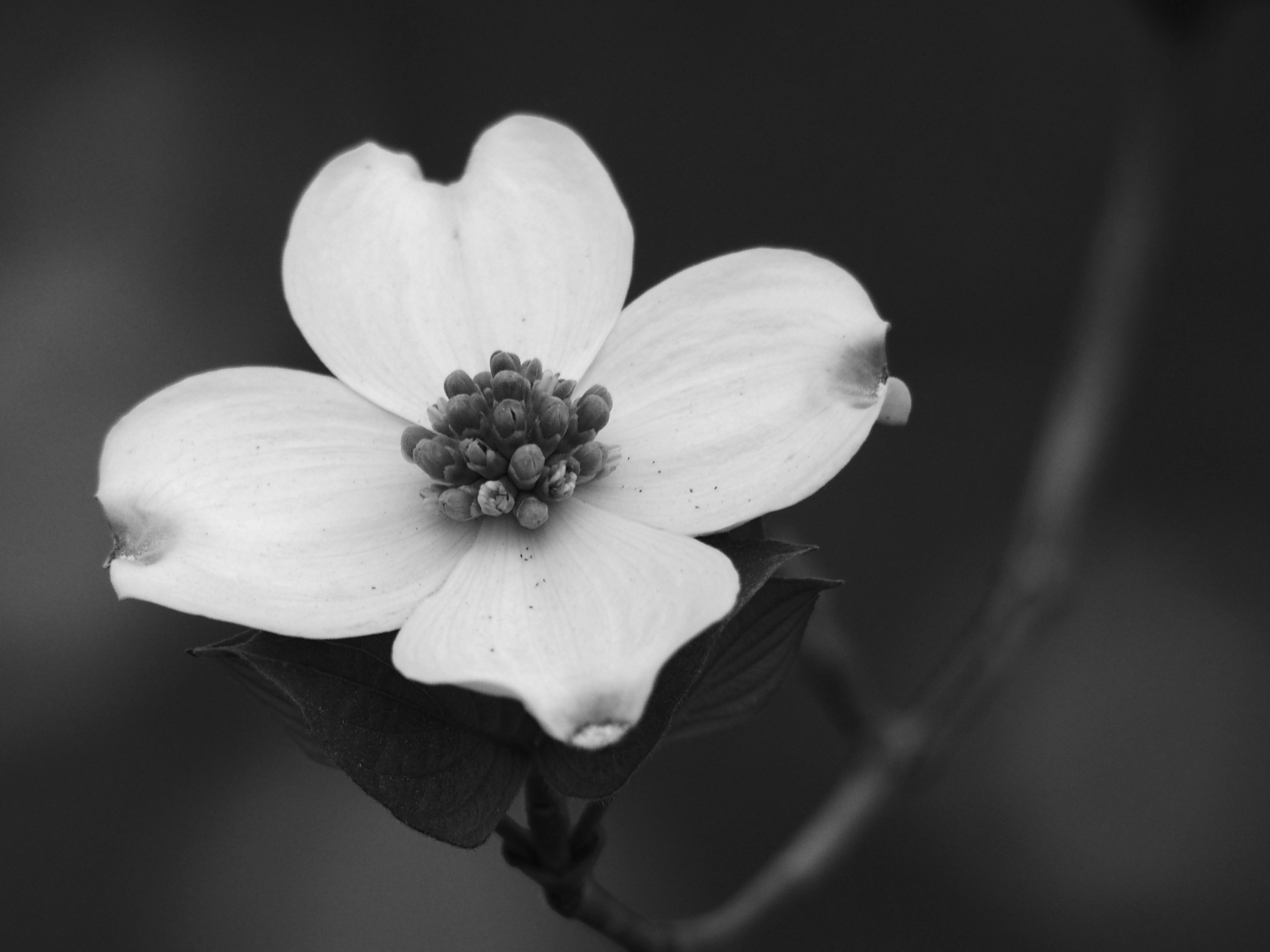 Dogwoods The Eff Stop