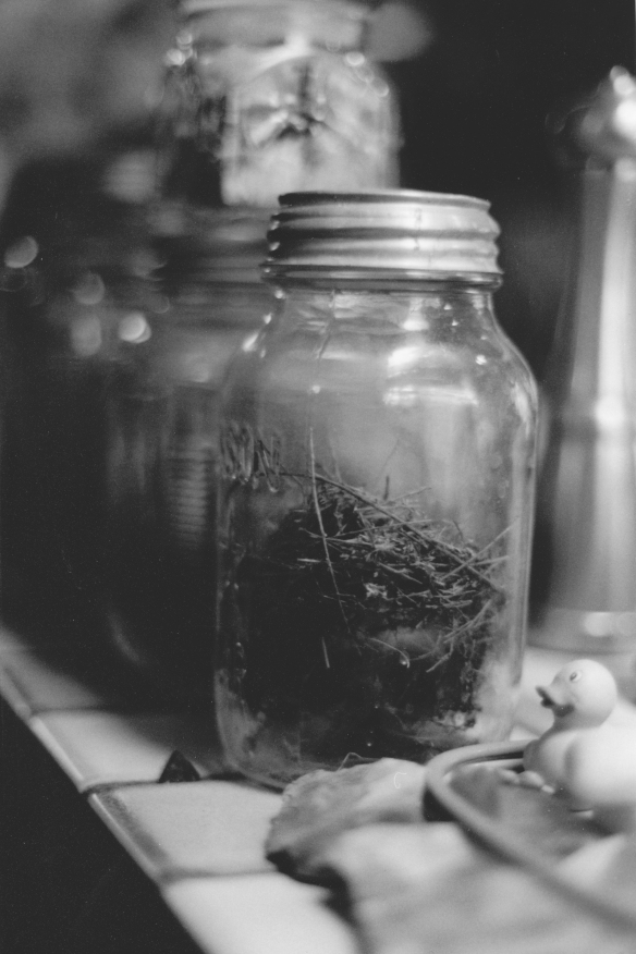 Mason Jars Full of Bird Nests
