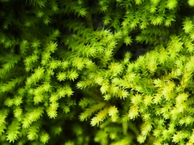 It amazes me to find the shapes of stars in the tiniest mosses