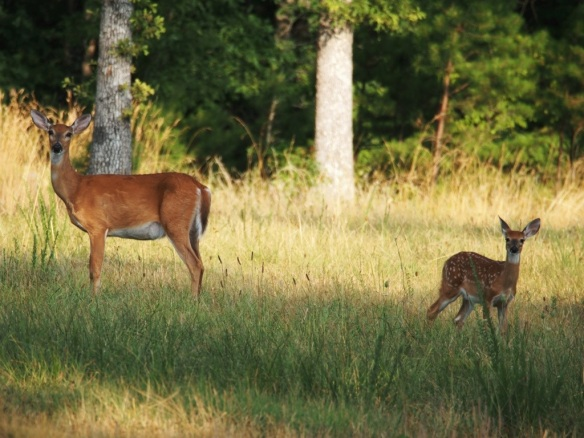 Doe is pretty calm as always but this baby was not - no white mark either.
