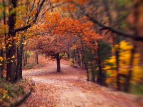 This is a tilt-shift image of the same curve with the tree in the middle of the road - the tilt shift lets me make that lone tree the star of the image - I was hoping for the feeling of going through a tunnel of tree branches and this comes pretty close.