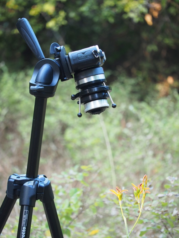 A side view of the tilt-shift set up on my tripod. Each of the threaded rods help you to fine tune the shift. For the shots in this post I went with a more casual approach - point, focus, shoot, try again.