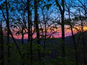 Horizon through the Trees